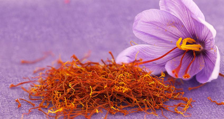 Image result for crocus sativus